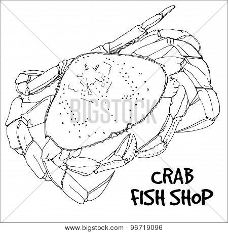 Crab in lines on white background.