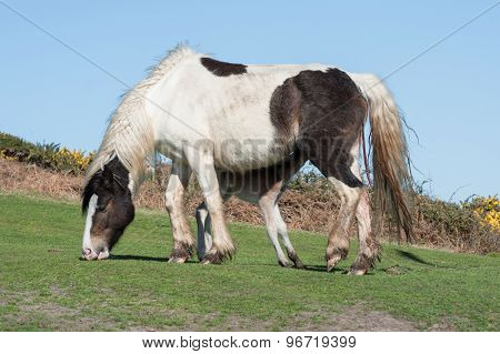 Newborn Foal Feeding