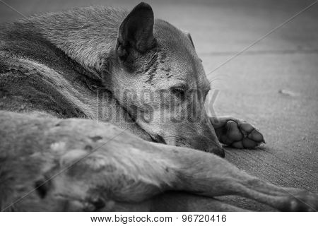 The Homeless Dog On Side Street, Back And White Tone