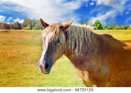 Red country horse in the field on cloudy sky background