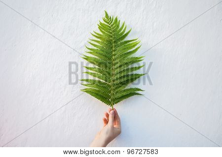 Hand Holding Young Fern Leaf