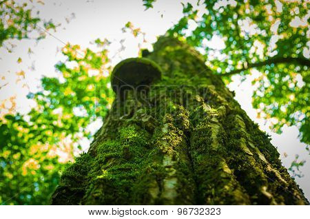 Large Tree In The Moss