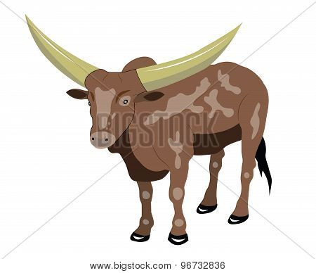 Bull with big horns.