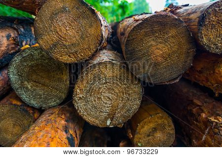 Old Brown Pine Logs