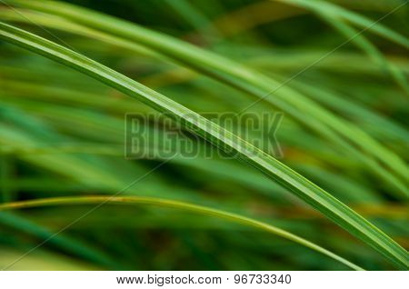 Background Good Forest Green Sedge