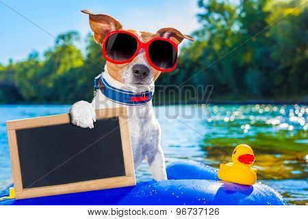 Beach Summer Dog