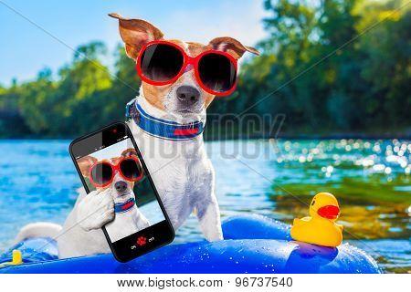 Beach Summer Dog Selfie