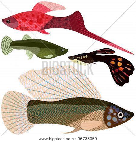 Set Viviparous Fishes Aquarium.