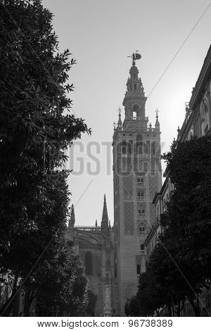 Giralda In Black And White