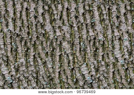 Bark of tree. Seamless Tileable Texture.