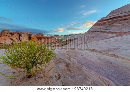 Single Tree On A Desert Valley Of Fire State Park Nevada