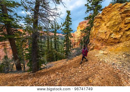 Woman Backpacker Hiking Down The Ponderosa Canyon Bryce National Park