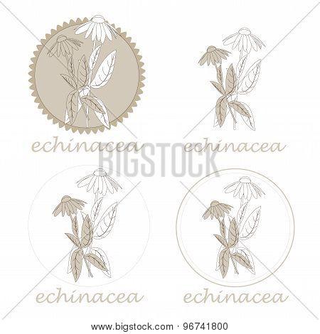 echinacea labels