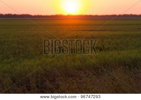 Rural Sunset