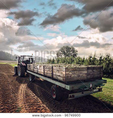 Old Tractor Carrying Wooden Crates With Fruits