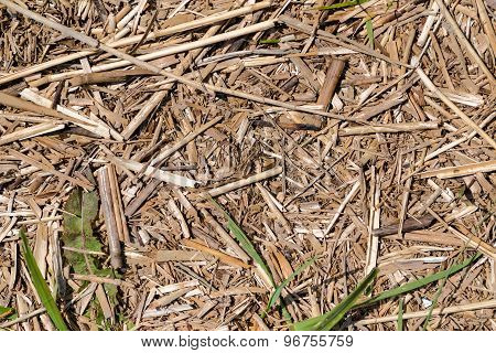 background dry withered grass