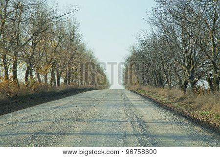 Gravel road through the forest