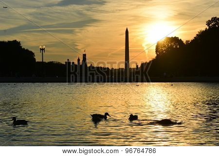 Washington DC - Ducks in silhouettes  in Capitol Building reflection pool with Washington Monument background at sunset
