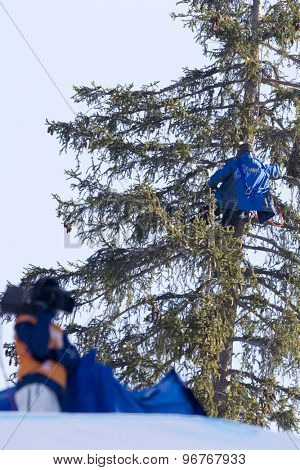 GARMISCH PARTENKIRCHEN, GERMANY. Feb 14 2011:USA Ski team head coach Sasha Rearick, climbs a tree to get a better view of the men's downhill at the 2011 Alpine skiing World Championships