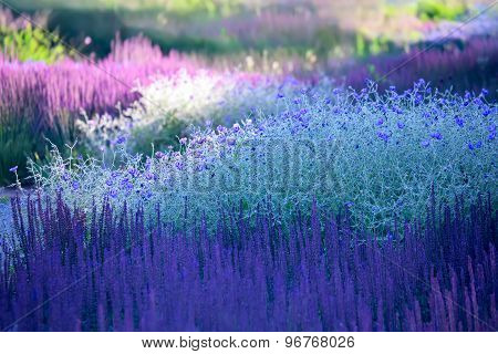 Blossoming Plants - Landscaping