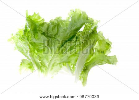 Salad Herb Isolated On A White