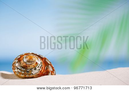 tropical shell on white Florida beach sand under sun light, shallow dof
