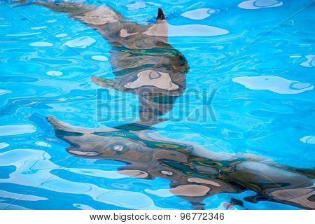 Abstract Background With Dolphins Under Water