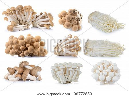 Brown Beech Mushroom , White Beech Mushrooms , Shiitake Mushroom,  Enoki Mushroom On White Backgroun