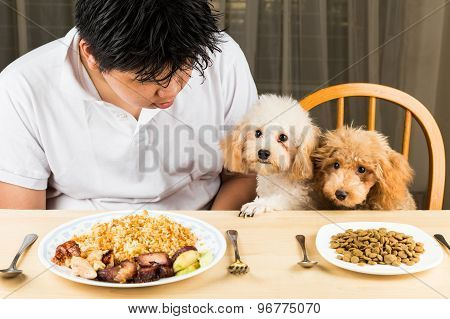 Puppies eyeing plate of rice and meat on plate and show no interest on her plate of dried dog food