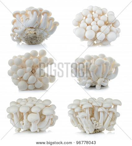 White Beech Mushrooms, Shimeji Mushroom, Edible Mushroom Isolated On White Background