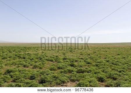 Spring Steppe