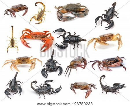 Scorpion And Crab Isolated On White Background