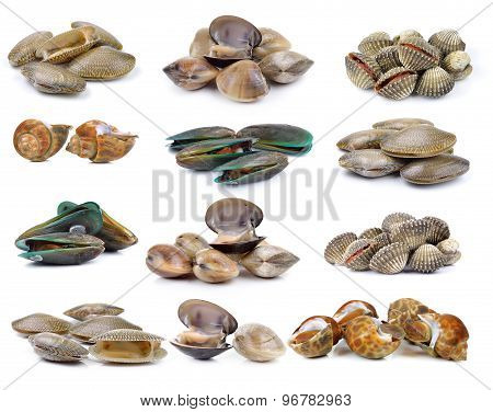 Enamel Venus Shell, Clam Shellfish, Surf Clam, Mussel,  Spotted Babylon On White Background