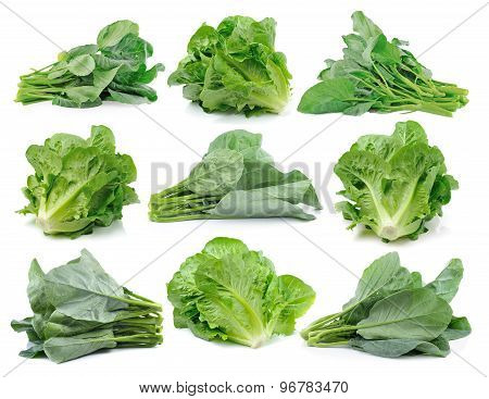 Chinese Broccoli And Cos On White Background