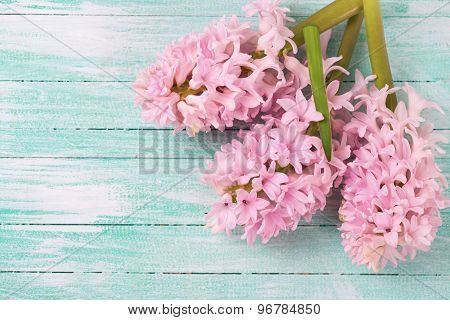 Background With Fresh Hyacinths Flowers