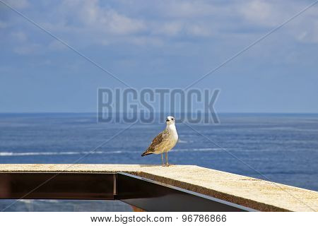 Sea Gull On The Parapet In Front Of Mediterranean Sea