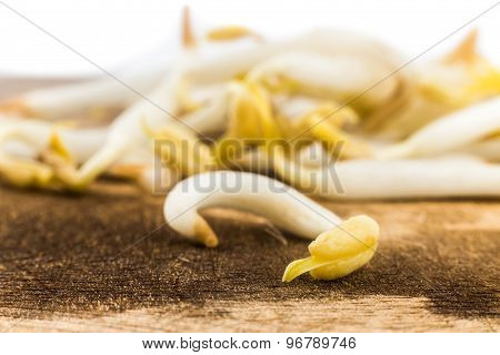 Close up of bean sprout with focus on a single piece on foreground