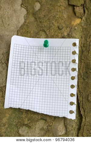 Piece Of Paper At The Bark Of Tree