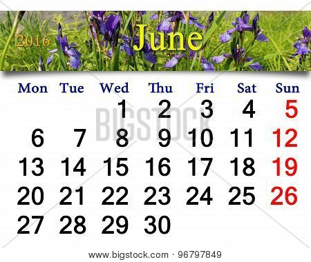 Calendar For June 2016 With Image Of Blossoming Iris