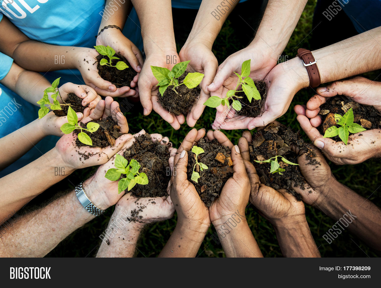 People hands cupping plant nurture image photo bigstock - Nurture images download ...