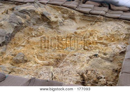Fossil Park Digsite Area