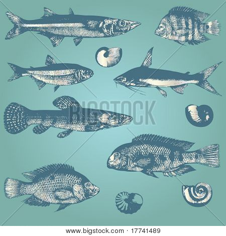Vintage set of fishes and shells
