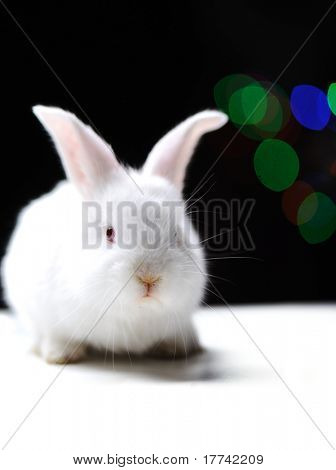 White beautiful rabbit, Easter bunny on black background with blured lights