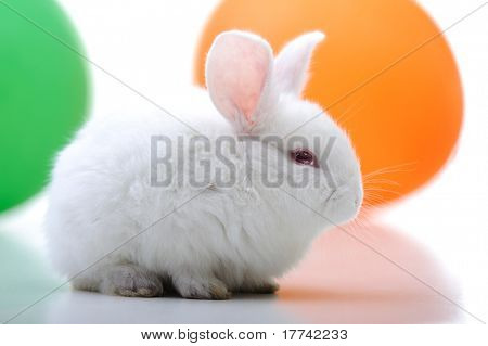 White beautiful rabbit, Easter bunny celebrating