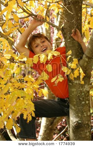 Child Climbing In The Tree Branches