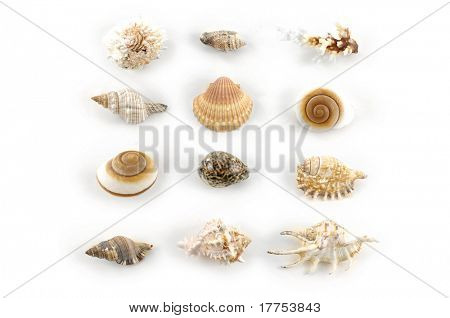 Conchas sobre fondo blanco