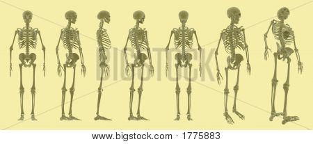 Multi View Skeleton Array