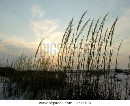 Beach Sea Oats
