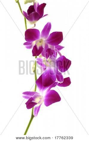 Macro of a beautiful pink orchid