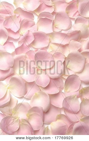 Pink rose petals seamless background